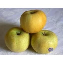 Pomme Chanteclerc bio ,...